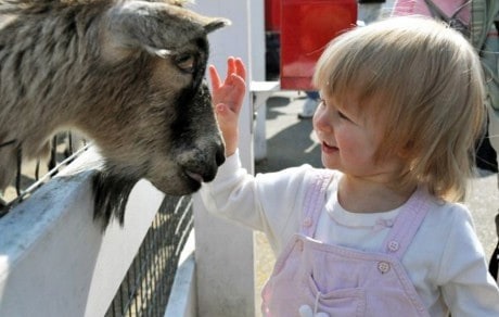 Pilot Project to Develop Healthy Fair and Petting Zoo Workshops in Minnesota