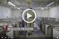 Preventing Needlestick Injuries - Proper Use on Swine and Hog Farms Image