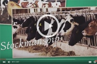 Dairy Stockmanship Video Part 4 Image