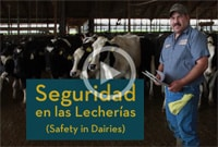 Immigrant Dairy Workers - A Training Model for Health and Safety on the Farm Image