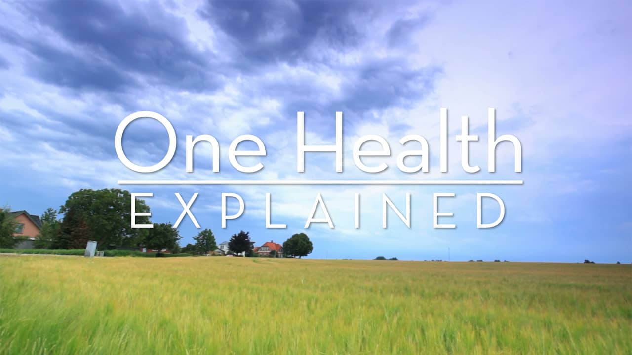One Health Explained Image
