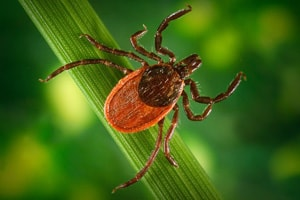 Farm Safety Check: Tick-borne Disease