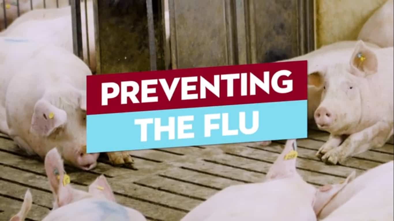 Protecting Pigs and People from the Flu Image
