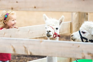 Olmsted County's New Video Promotes Petting Zoo Set-Up Safety