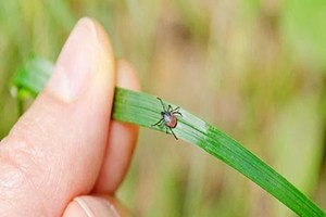 SPOTLIGHT: Precarious bugs to avoid this spring